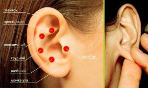 Основные акупунктурные точки похудения на ушах